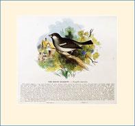 sparrow, SPCK