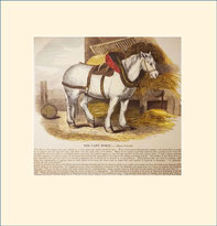 cart-horse, SPCK