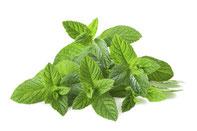 erfrischendes Aroma, Menthol, Minzenaroma, Zusatzaromen