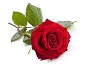 Rosenblätter, Liquid mit Rosengeschmack, Rosenaroma, Rosenliquid