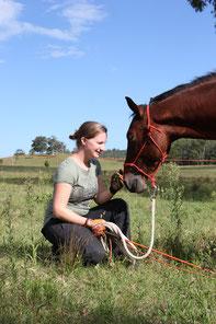 Zubehör Pferdetraining kaufen