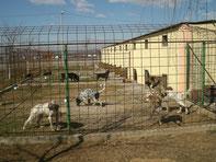 Hundehaus mit Freilauf                                                                                                              Zwinger Freilauf geplant