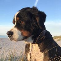 Hundeportrait, Mischling