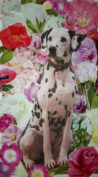 Hundeportrait, Labrador