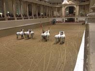 Paardenshow Wenen