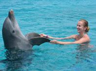 Zwemmen met dolfijnen in Curaçao