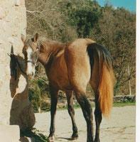 Mariposa, 2 Jahre alt
