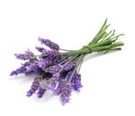 Ätherische Öle - Lavendel