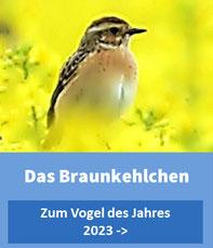 Rotkehlchen Vogel des Jahres 2021