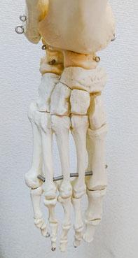 慢性膝関節症や膝の痛みの改善・回復は足の骨にもきちんと目を向ける必要がある(仙台市宮城野区の治療整体整骨院)