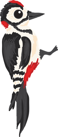 British wildlife Woodpecker woodland animal vinyl sticker