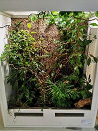 Trioceros sternfeldi terrarium