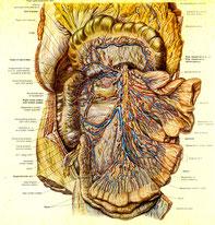 小腸の裏側