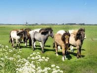 馬の放牧中