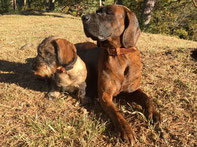Lüti Hunde halsband - vintage Leder, nickelfrei, massiv