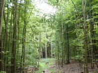 Im Wald einfach mal die Natur genießen