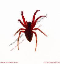 """""""The red spider waltz."""" - Spinne, neon ©Zarahzeta2016"""