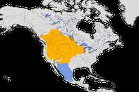 Karte zur Verbreitung des Brillenstärlings (Xanthocephalus xanthocephalus).