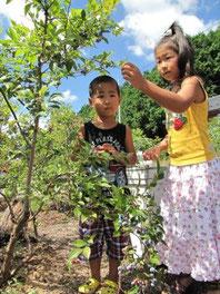 無農薬だから、子供さんでも安心です。