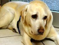 Hundekrankheiten mit Homöopathie behandeln