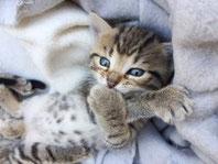 Katzenkrankheiten mit Homöopathie behandeln