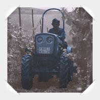 Eicher Schmalspur Traktor