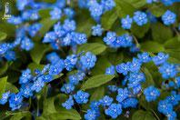 Gedenkemein blau