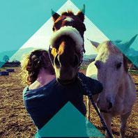 Palpation der Halswirbel  beim Pferd