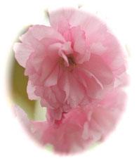 【季節の花】四季を感じる花アロマを限定•時価にてご提供する予定です