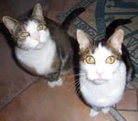 Zwillingskater Don Carlos von mir so benannt; einst 6-jährig aus dem Tierheim im März 2012 geholt