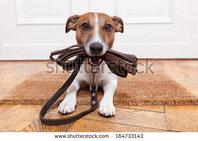 Cours privé pour chien Vaud