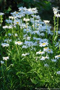 """Atelier de jardinage """"Préserver la biodiversité grâce aux plantes de votre jardin"""""""