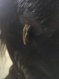 Blutegeltherapie Knie Pferd