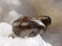 Jade brun ,  pierre gemme, Pierres de Lumière Saint Rémy de Provence, pierre roulée, pierre brute, galet, lithothérapie, vertus, propriétés, ésotérisme