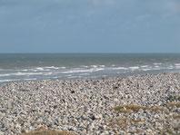 Eloge de la lenteur, sorties art et nature en baie de somme, baie de somme, falaises, galets, littoral, picardie, marcher, respirer
