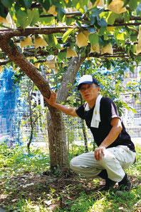 八達の木と成夫さん。20種を超す多品種を栽培する松屋梨園だが、成夫さんの言葉にはやはり八達への強いこだわりを感じる。