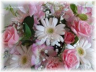 2013年 春の花