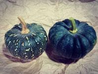 【南瓜】日本南瓜やF1品種など毎年数品種栽培しています。
