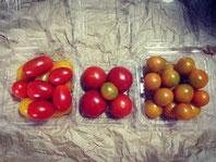 【トマト】ミニトマト、中玉トマトを中心にお届けします。品種はたくさんあるので、毎年色々です。F1では毎年定番で3品種ほど栽培しています。