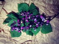 【RUBY MOON 】 マメ、サヤ、花、葉と全草に渡り使えます。