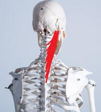 首が痛い奈良県葛城市の男性