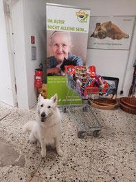 Futterspenden für die Tiertafel, mit weißem Schäferhund
