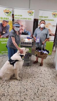Futterspende mit weißem Schäferhund
