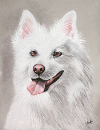 white dog drawing that's perfect for animal lovers