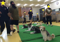 犬 しつけ 専門学校