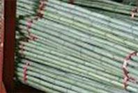 真竹の原竹(加工されていない竹)