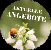 Button Sonderverkauf Husmann Heide-Jungpflanzen