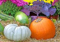 Rezept des Monats, Irland, Kürbis, Halloween