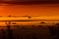 Vaches dans la brume au couché du soleil