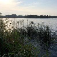An einem Havelsee bei Groß Kreutz
